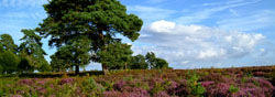 New Forest Walking Festival