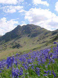 Bluebells on Haystacks